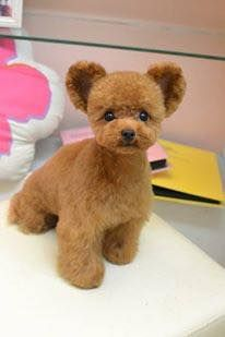 Adorable asian teddy bear trim