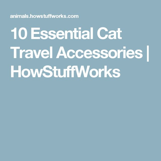 10 Essential Cat Travel Accessories | HowStuffWorks