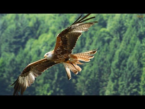 41 Best Beautiful Eagles Images On Pinterest