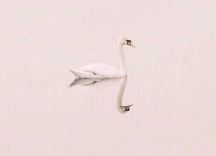 """"""" i got attacked by swan, you hear that. a stupid swan."""""""