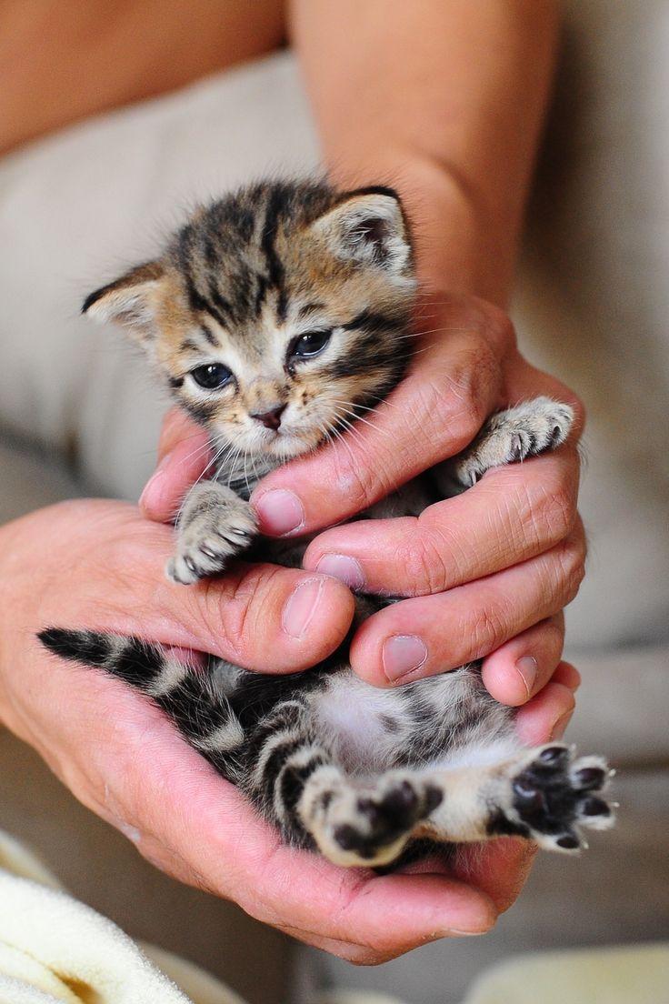 ¯\_(ツ)_/¯ tiny paws = much love <3