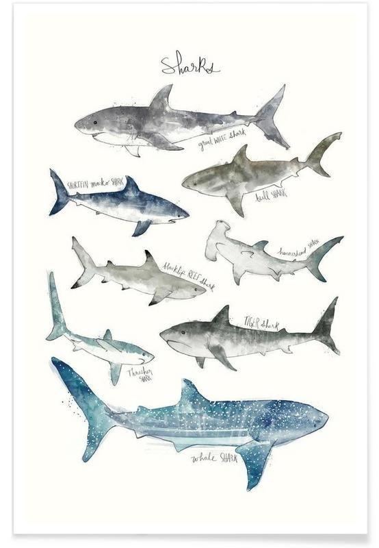 Sharks als Premium Poster