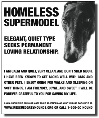 adoption poster from rescuedgreyhounds.com