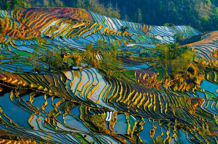 As 15 paisagens mais coloridas do mundo - Campos de Arroz em Yuanyang, China.