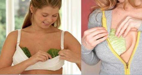 O repolho tem muitos benefícios à nossa saúde. Ele é uma ótima fonte de vitamina C. Ajuda a ci...