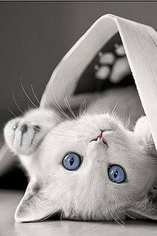 I remember a great cat named Purity. White with blue eyes❤️