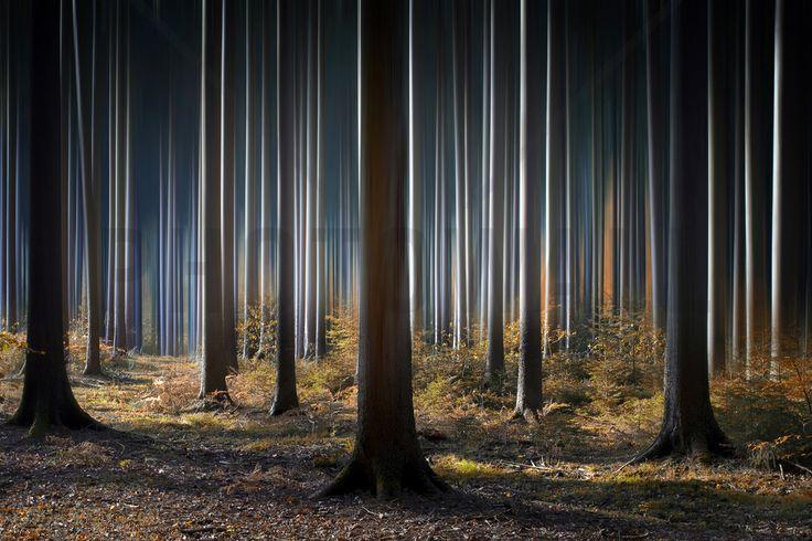 Mystic Woods - Fototapeter & Tapeter - Photowall