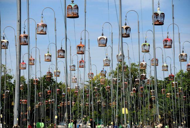 Bird caging _Thailand