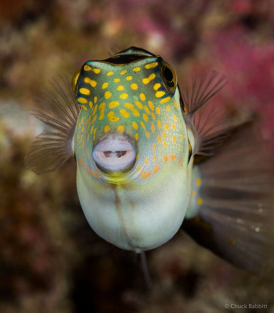 40 best images about beaches smiling fish on for Freshwater fish with teeth