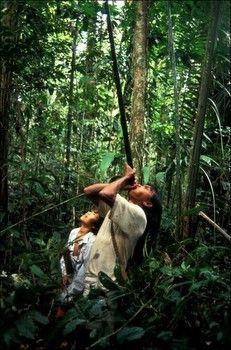 En Amérique, la déforestation massive prive les populations traditionnelles d'une grande part de territoire. Or le rapport à la Terre est fondamental pour ces peuples. La gestion des dernières forêts primaires d'Amazonie par les Indiens eux-mêmes est un droit fondamental reconnu par la Charte des Droits de l'Homme et qui sera inscrit dans la future Déclaration des Peuples Autochtones à l'ONU. Reste à l'appliquer dans les faits.