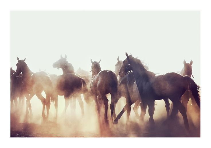 Photography 'Horses' by Kalle  - Dusty Deco, Photo Art