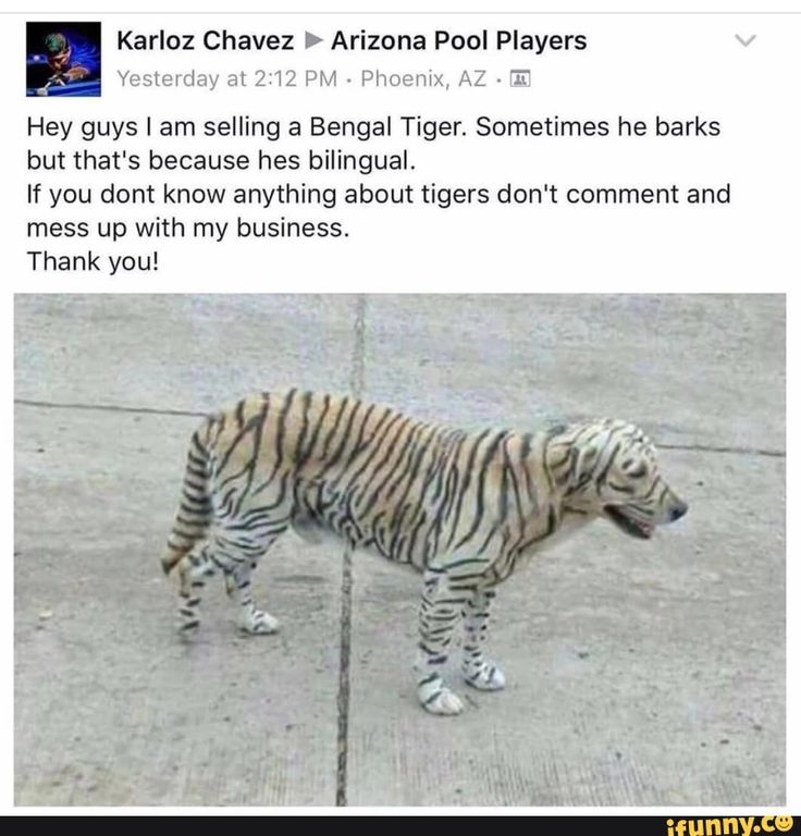 Tiger Dog Funny Pictures Funny Puns Daily Funny