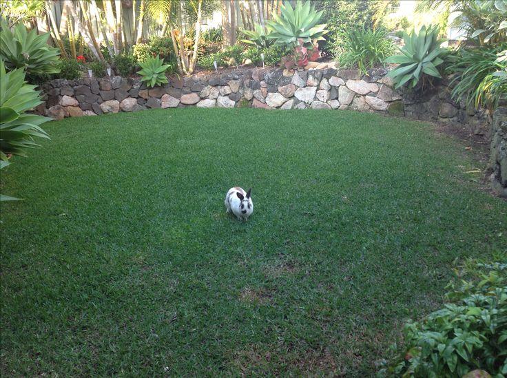 The luckiest bunny in Kareela. Miss Pinkie Pie
