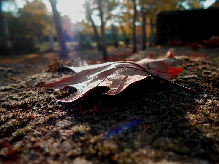 Ősz. Falevél. Autumn. Leaf.