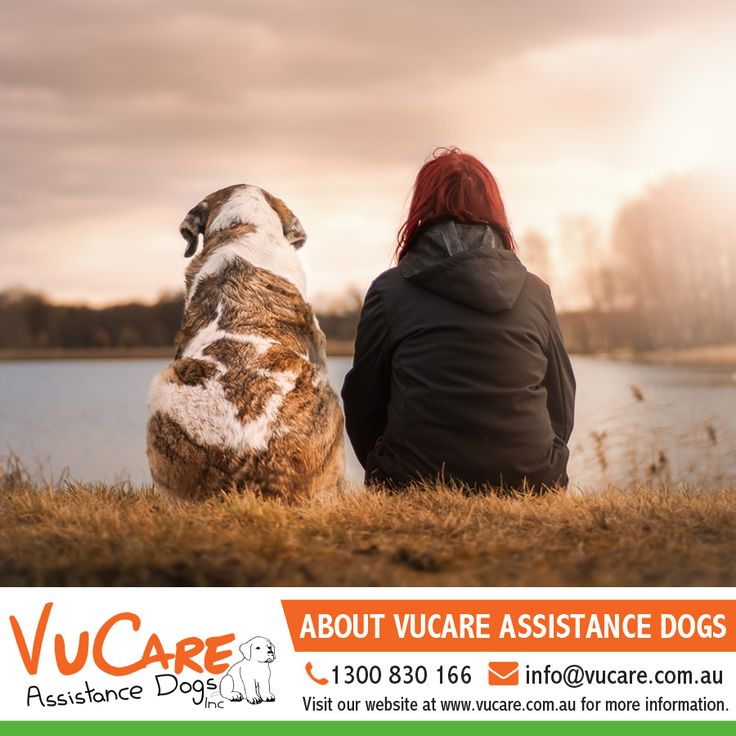 VuCare Assistance Dogs   For more information call us on 1300 830 166 or email us at info@vucare.com.au. Visit VuCare Assistance Dogs website at http://vucare.com.au/  #Dogs #Pets #VuCare #DogsAssistance #Dog #DogOnDuty #Puppyfriend #Puppyparent #DogCare #ServiceDogs #DogsForDisabilities