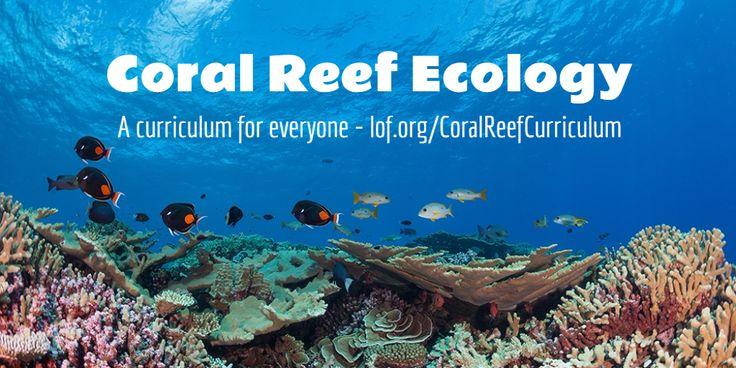 Get a comprehensive marine education in this engaging coral reef ecology curriculum, free to teachers and studentsof all ages