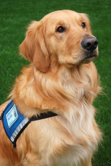 Best Therapy Dogs Images On Pinterest Therapy Dogs - Born blind smiley the golden retriever becomes a loving therapy dog