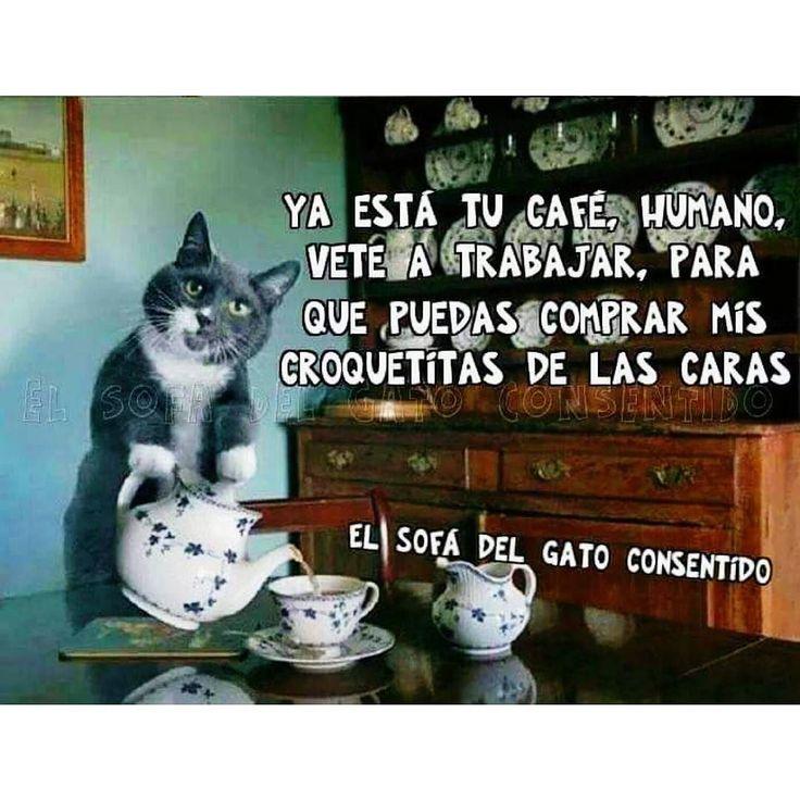 Oigan que no estaría nada mal si de veras lo hiciera eh? Mi gordo se tiene que poner las pilas hahaha #reto365fotos #100happydays #cat #cats #catsofinstagram #catoftheday #meow #kitty #gato #catstagram #instacat #instameow #meme #memes #humor