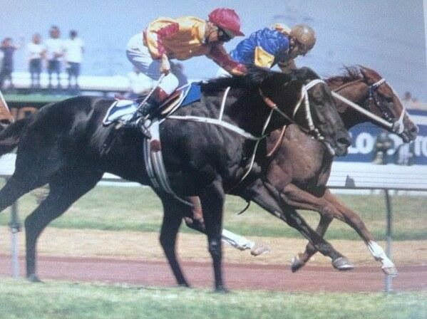 GURNER'S LANE (NZ) Ch g 1978, Sir Tristram (Ire) - Taiona gets a rails run to just beat the mighty KINGSTON TOWN (Aus) Blk g 1976, Bletchingly - Ada Hunter (Ger), in the 1982 VRC Melbourne Cup, to to the sadness of millions who adored the champion black gelding. It was the one race that eluded him. The winner had also won the VATC Caulfield Cup that year, one of only 11 horses to date to have done so.