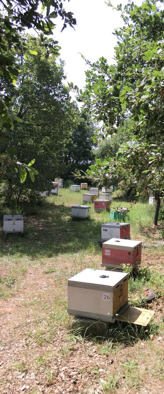 Μελισσοκομείο νότια αποψη