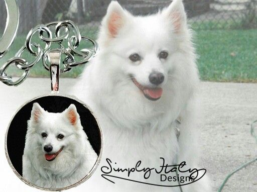 Beautiful and exclusive photo keepsakes made from your photo for the perfect memories.  www.simplyitalydesigns.com   #simplyitalydesigns #dogs #doglovers #dogoftheday #dogphotography #funnydog #funphoto #dogmom #dogsofinstagram #ilovemydog #instagramdogs #dogoftheday #giftsfordoglovers #giftsfordogs #photokeepsake #photojewelry #keepsake #inspiration #memories #theperfectgift