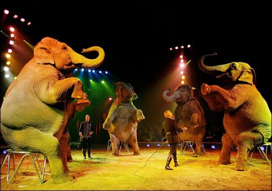 Unmonitored-Facts about circuses