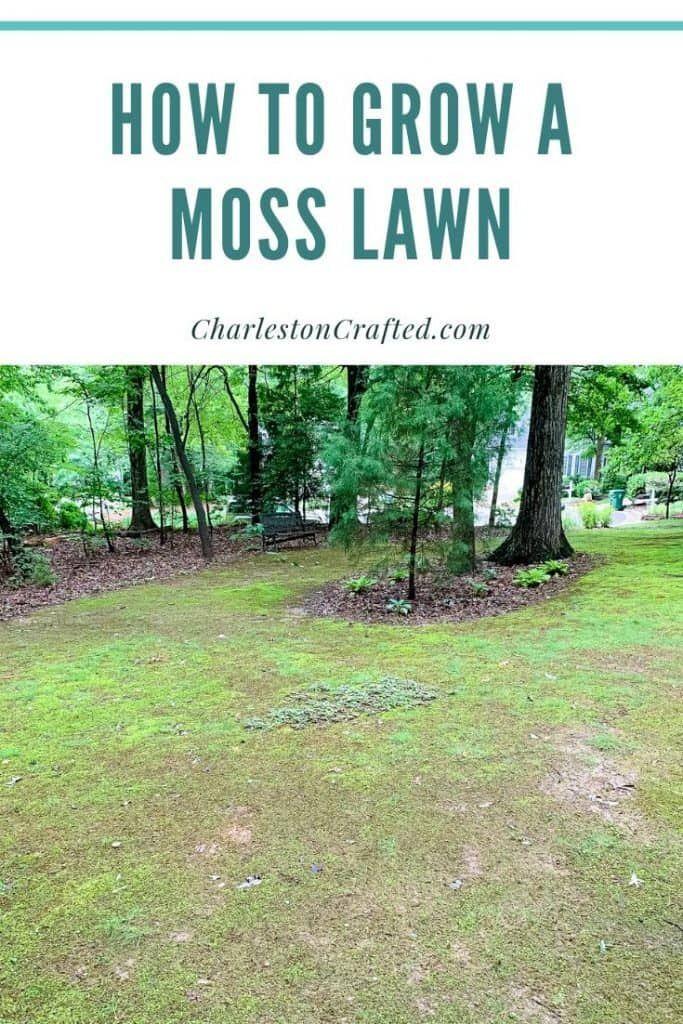How To Grow Moss In Your Yard Moss Lawn Growing Moss Moss Garden