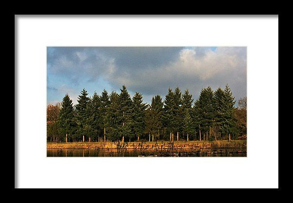 Pines across the water, landscape photo as wall art #netherland #Enschede #landscape #photo #photography #gerhardhoogterp #wallart