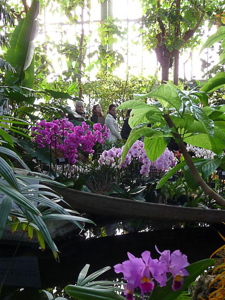 Les 164 meilleures images du tableau Jardin des plantes - Paris sur ...