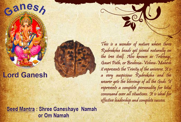 Benefits of Ganesh Rudraksha:  God: Lord Ganesh  This is a wonder of nature where three Rudraksha beads get joined naturally on the tree itself. Also known as Tribhagi, Gauri Path, or Brahma-Vishnu-Mahesh it represents the Trinity of the universe. It is a very auspicious Rudraksha and the wearer gets the blessings of all the Gods. It represents a complete personality for total command over all situations. http://www.rudralife.com/Rudraksha/details.php?id=125