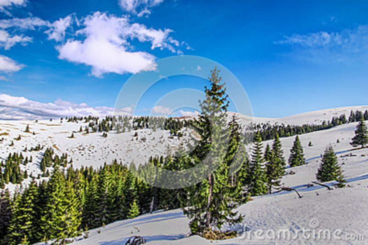 Mountain Forest - Download From Over 41 Million High Quality Stock Photos, Images, Vectors. Sign up for FREE today. Image: 67492620