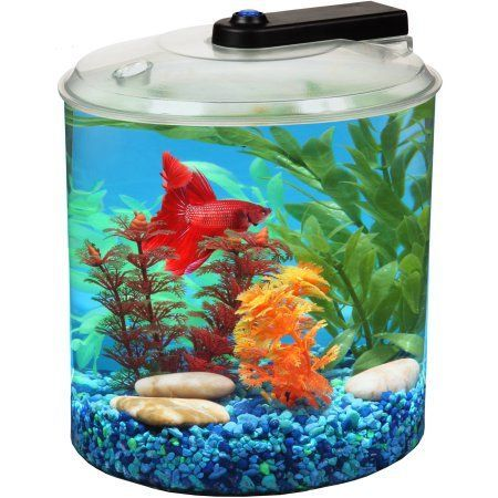 41 best images about fish tank on pinterest aquarium for Walmart betta fish