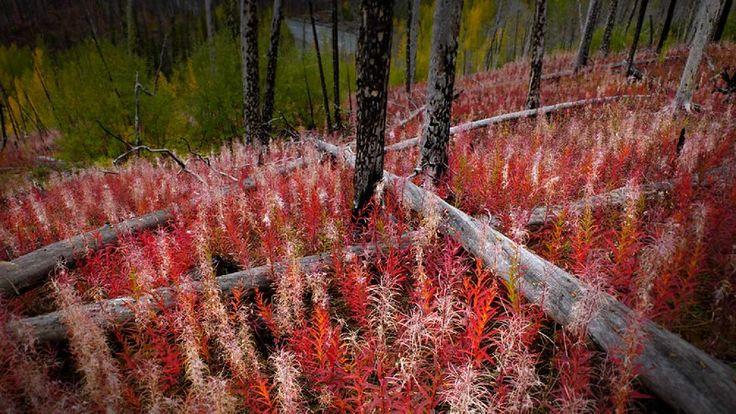 Famous Landscape Photographers - Carr Clifton