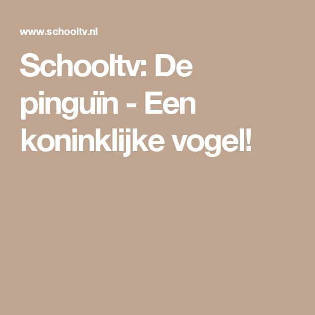 Schooltv: De pinguïn - Een koninklijke vogel!