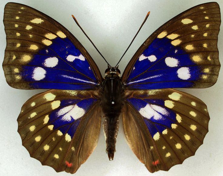 120 best Insects in Ja...