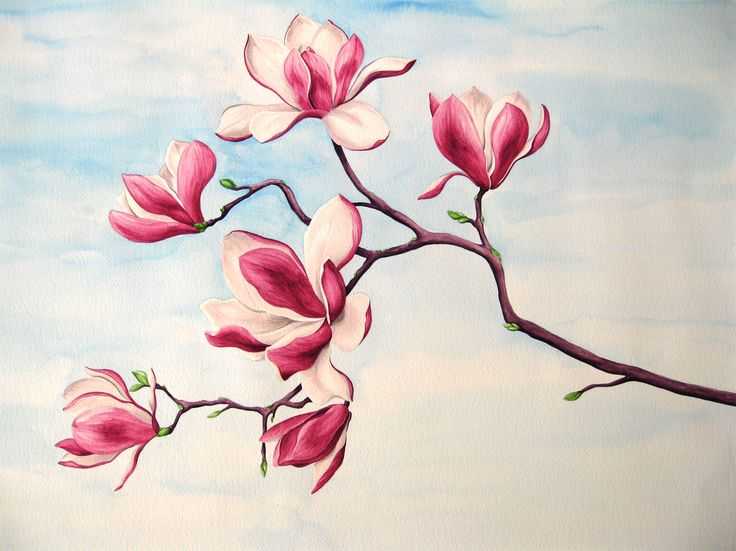 Acquarello: Ramo di magnolia.