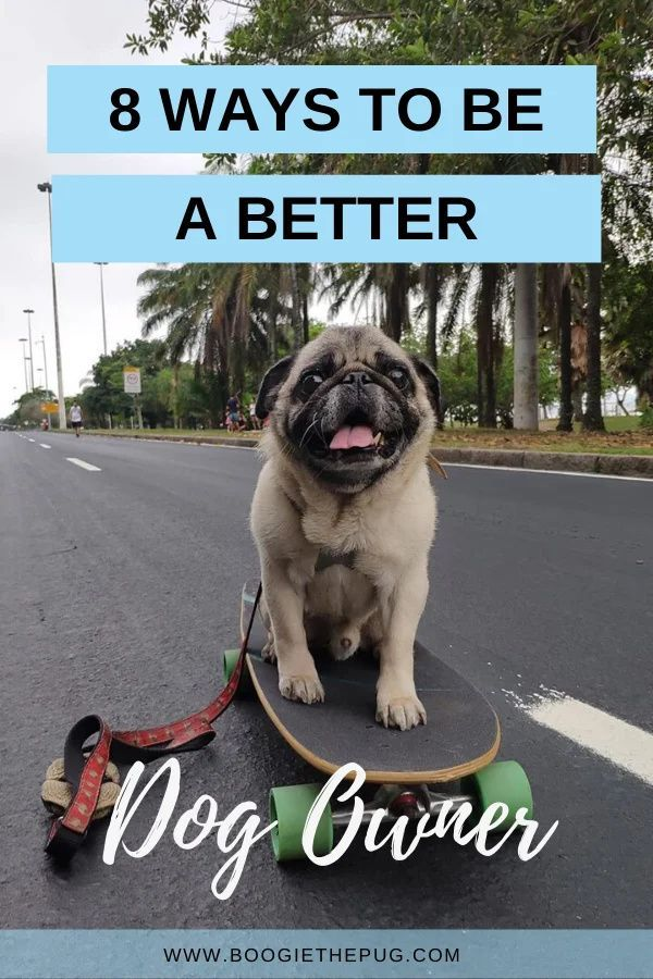 8 Ways To Be A Better Dog Owner In 2020 Best Dogs Dog Owners