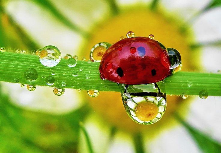 lady bug and dew drops by tugba kiper, via 500px