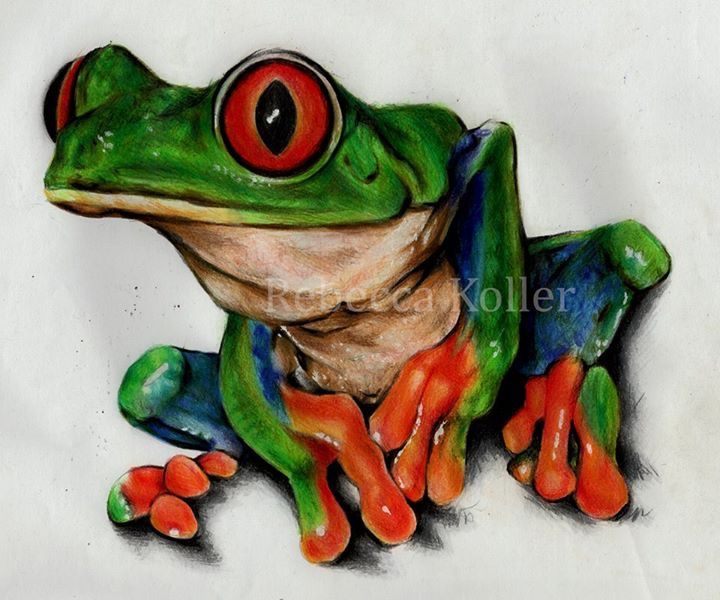 Latest frog illustration  Coloured pencil on paper