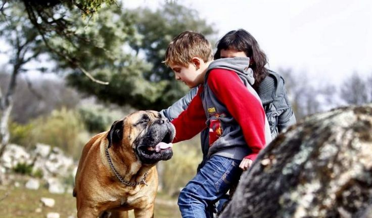"""Troylo, de perro de terapia a estrella del cine. Tras ser perro de terapia para niños con autismo, acompañó a Ricardo Darín en """"Truman"""", mejor película en los premios Goya 2016 / Mediterranean Natural"""