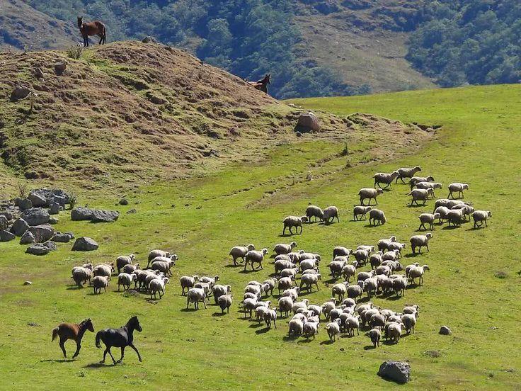 Tafi del Valle, Tucuman,Argentina. Precioso paisaje, hicimos el camino en auto, con mis padres. Nos invitaron a una antigua finca de campo, almorzamos comida tradicional del lugar.  No pueden faltar las empanadas.