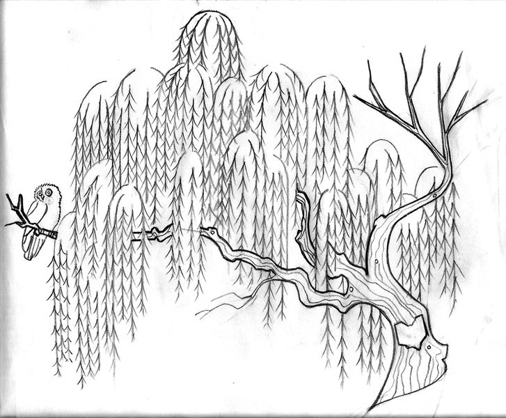 Owl On Willow Tree Tattoo Drawing photo - 4
