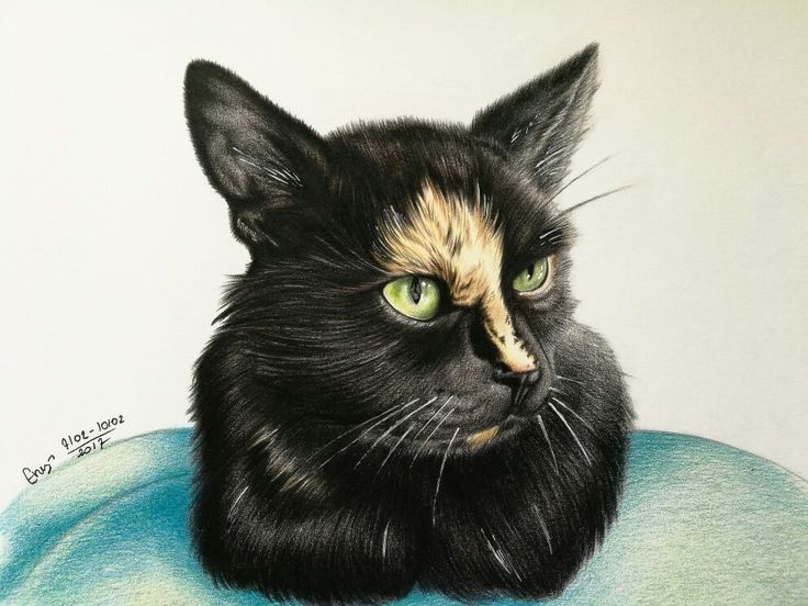 My cat color pencil drawing :) by Magdalena Leszczyniak