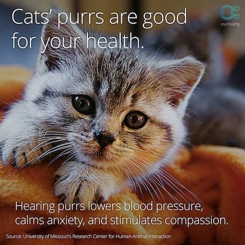 cat purrs good for your health