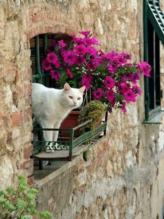 Romeo, Romeo. Wherefore art thou, Romeo?