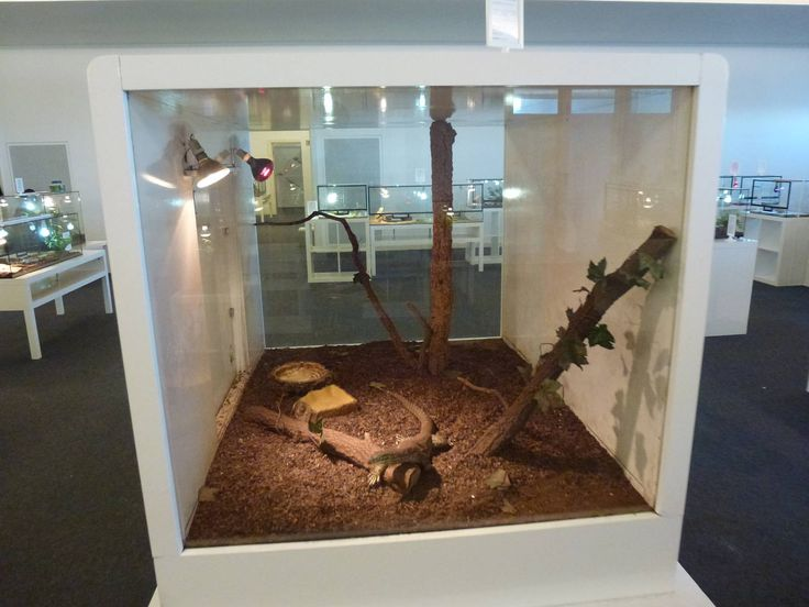 Yellow-spotted monitor enclosure