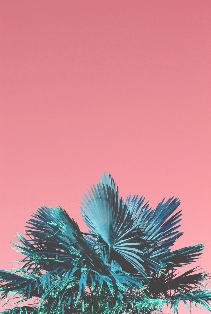 Cute Kawaii Pastel Wallpaper Pink Sky And Green Lush Palms Inspiration Oh The