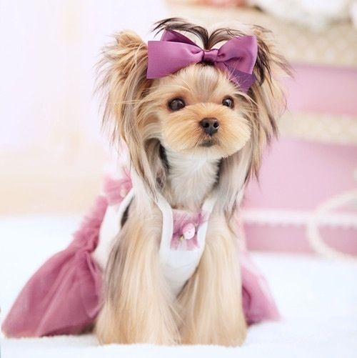 Dresses : CiCi Princess Lace Dog Dress. Available on www.petsionista.com