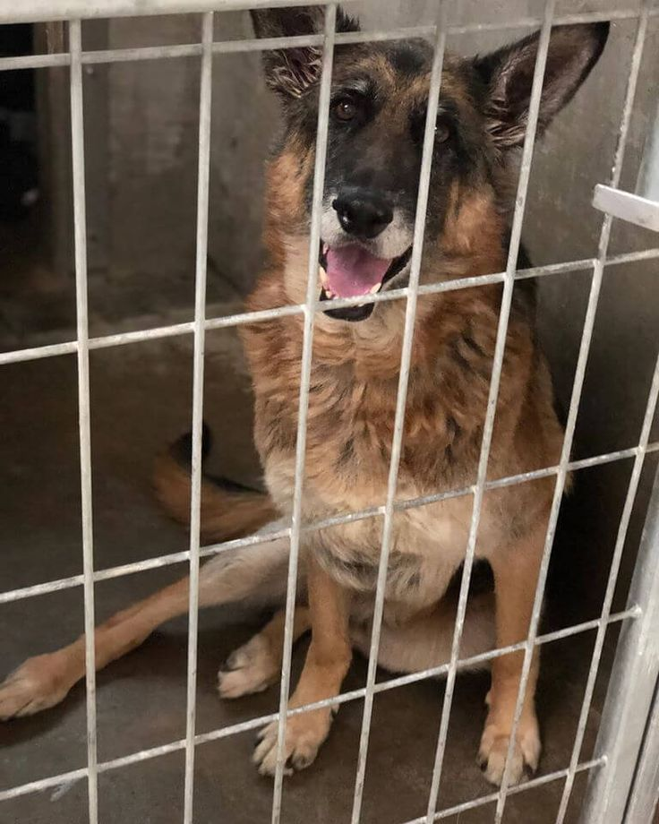 14+ East valley animal shelter images