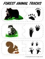 Not normally a fan of printables like this, but here is a good set of free PK printables for learning about animals of the forest